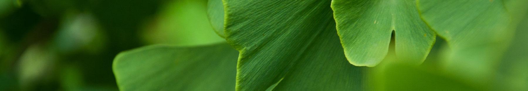 krankheit 04